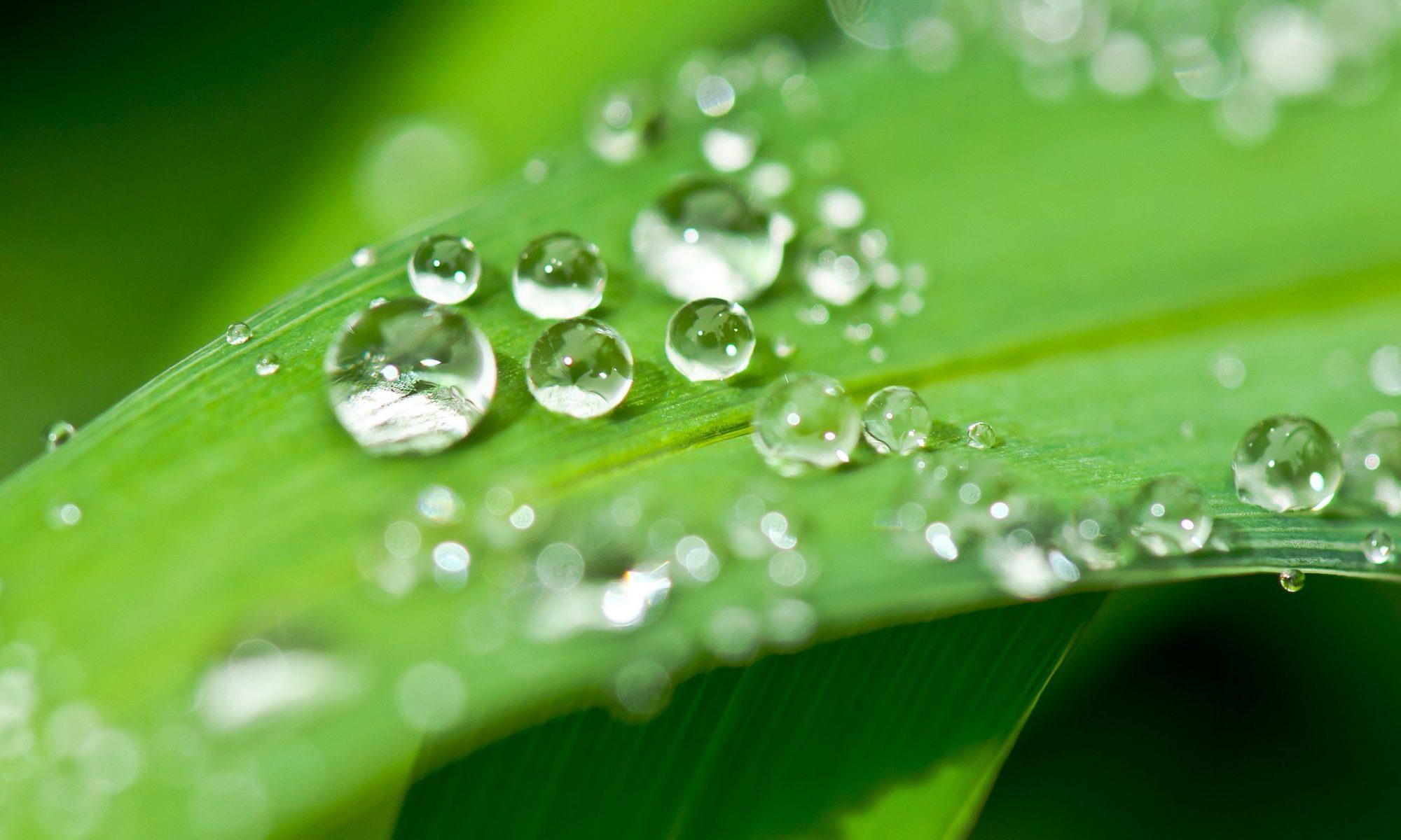 Bio-energetische Tandartspraktijk Huijmans